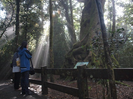木々の合間から光が降り注ぎます。