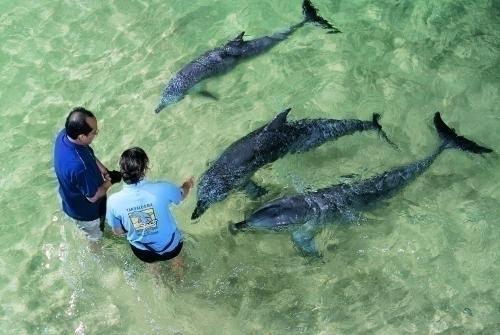 野生イルカへの餌付け体験