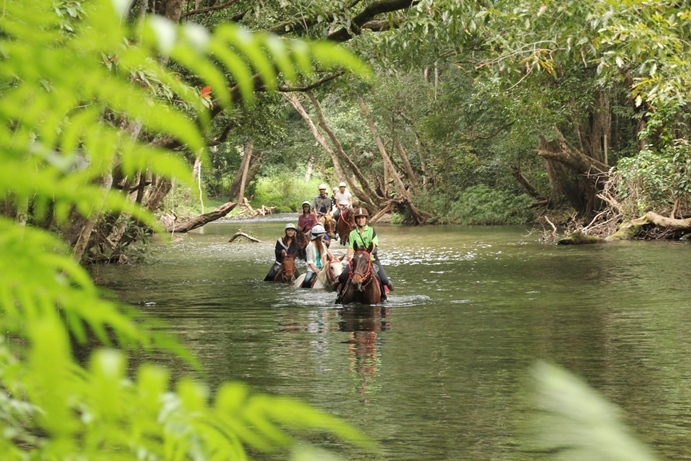 熱帯雨林の大自然の中での乗馬です!