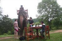 象乗り体験2
