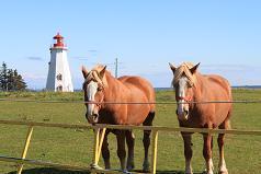 隠れた名所パミューラアイランドの灯台