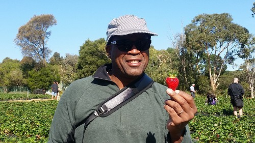 大きくて真っ赤なイチゴを見つけよう!