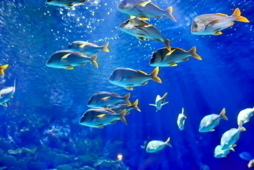 クリスタルクリアの海に住む色とりどりの熱帯魚たち