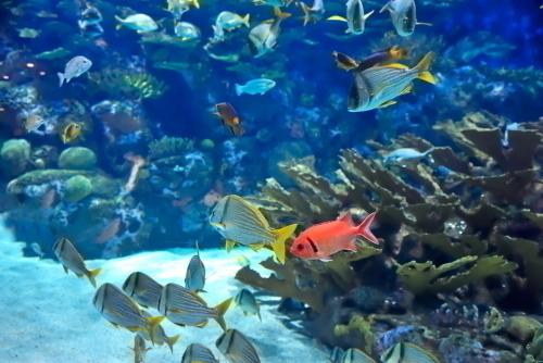 憧れの熱帯魚たちとご対面