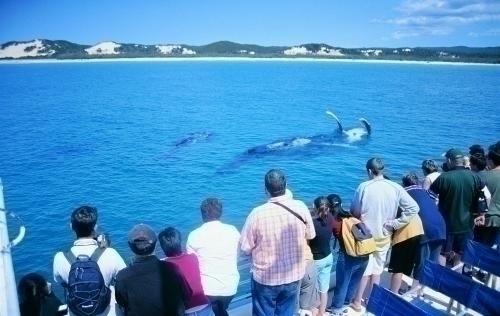 クジラに大接近!