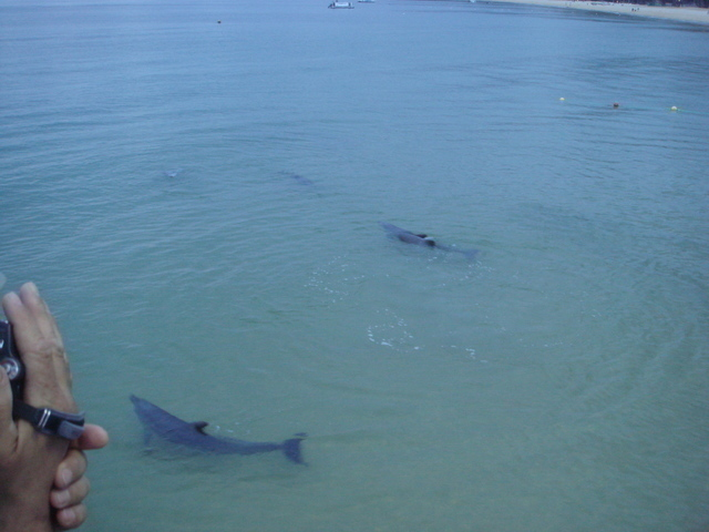 目の前を泳ぎ回るイルカ達を見物