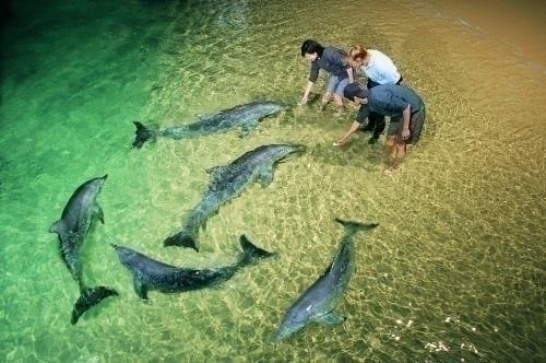 野生ですが、イルカにはそれぞれ名前がついています