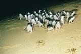 まさにペンギンパレード