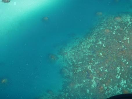 真下にサンゴ礁が見えています